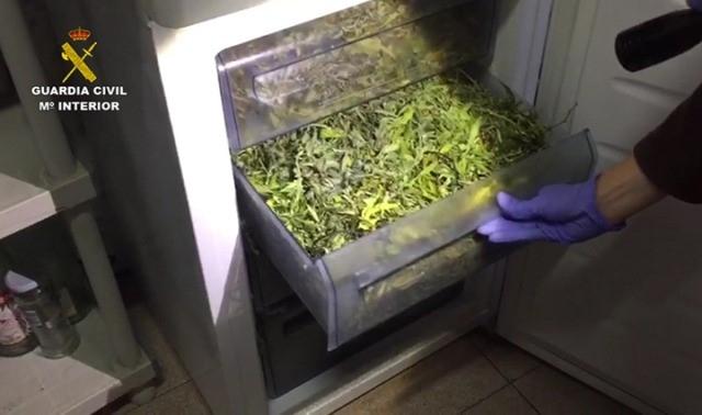 marihuana_operacion_wagen